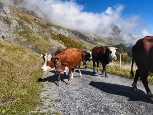 Rush hour on the Route de la Soif